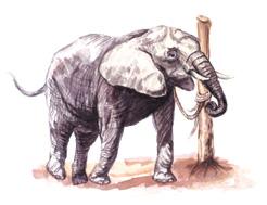elephant rope story
